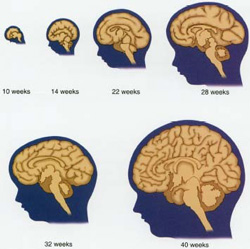 Phát triển trẻ em 101: Phát triển trí não sớm