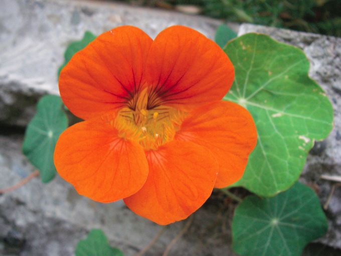 DIY With Kids: Trồng hoa ăn được